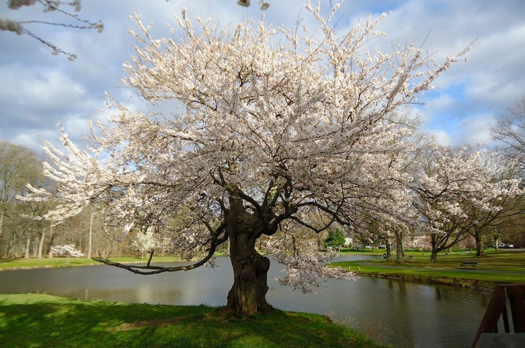 new jersey, spring, nature